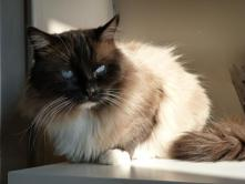 Male Seal Mitted